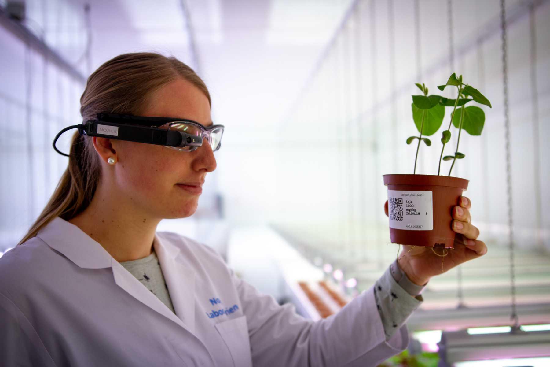 Mitarbeiterin im Labor nutzt Smart Glasses, um eine Pflanze zu untersuchen