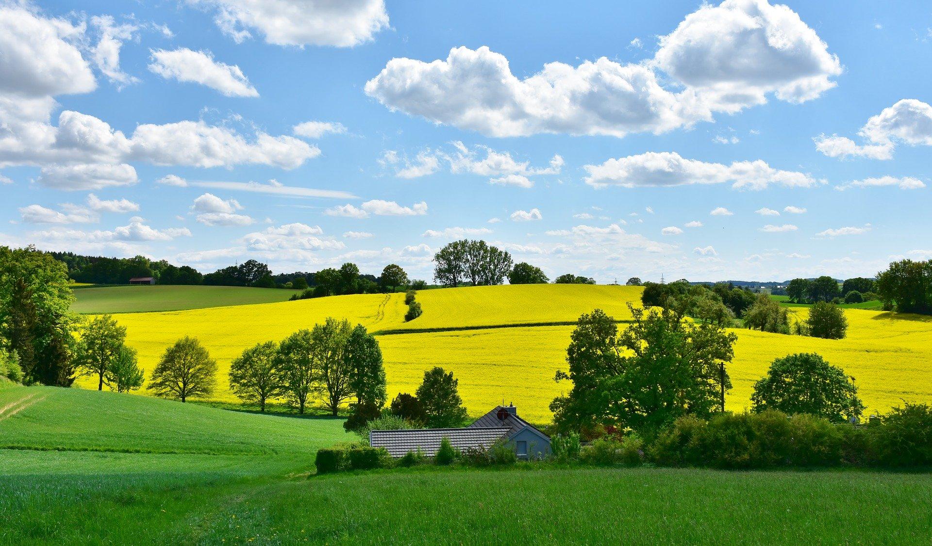 Blick auf Hügel mit Rapsfeld und Bäumen.